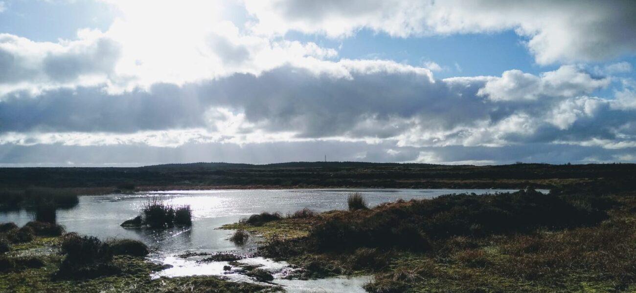 upland-bog-pool