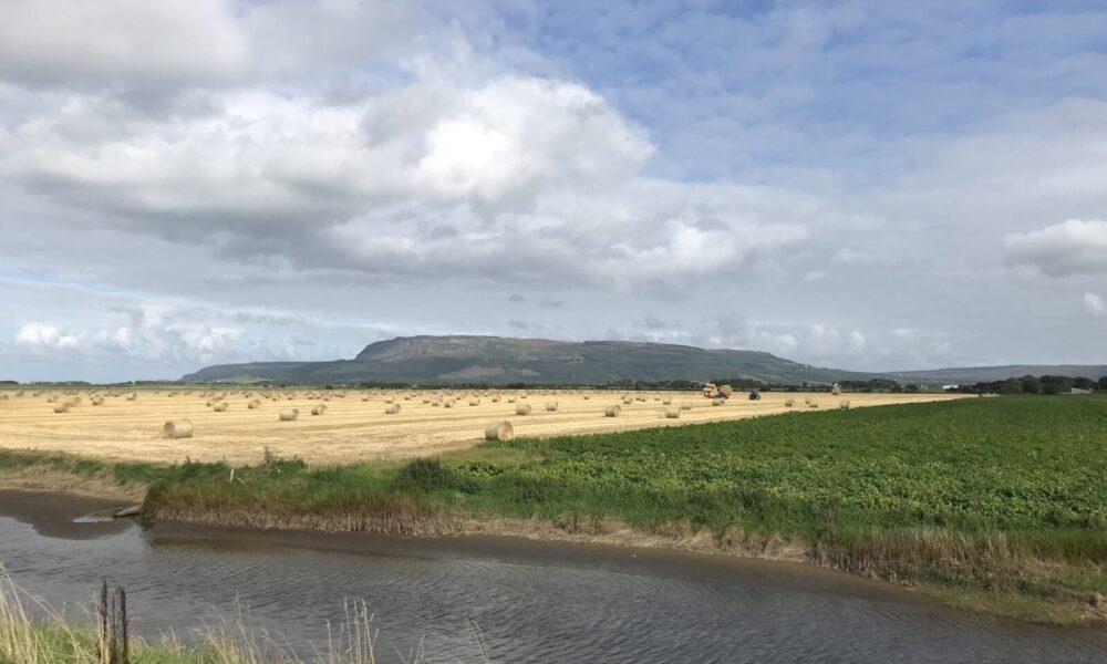 field-round-hay-bales